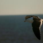 Fauna litoraleña